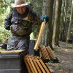 国産リンゴ蜂蜜 600ℊ 青森県産