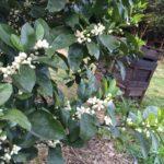 国産ミカン蜂蜜 150ℊ 長崎県